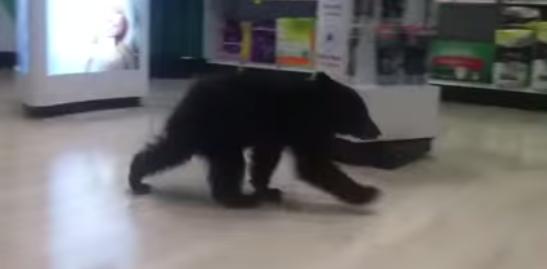 bearsa