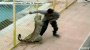 MUST WATCH Video Of Leopard Breaking Into School And Eating Everyone InSight