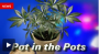 Dude Who Grew His Own Weed In Another Person's Flower Pot Was The Smartest Guy In PA Until He GotCaught